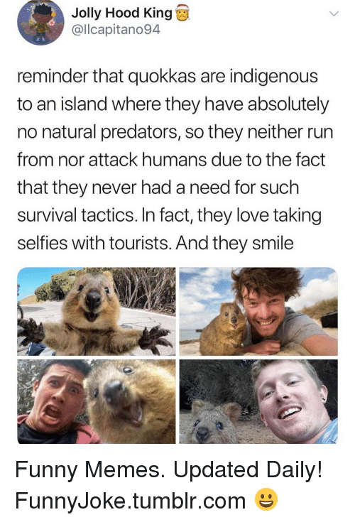 indigenous: Jolly Hood King  @llcapitano94  reminder that quokkas are indigenous  to an island where they have absolutely  no natural predators, so they neither run  from nor attack humans due to the fact  that they never had a need for such  survival tactics. In fact, they love taking  selfies with tourists. And they smile Funny Memes. Updated Daily! ⇢ FunnyJoke.tumblr.com 😀