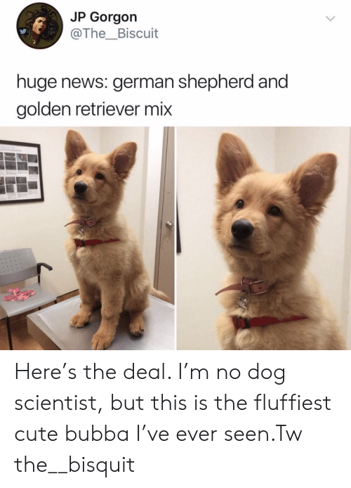 Bubba: JP Gorgon  @The_Biscuit  huge news: german shepherd and  golden retriever mix  Havno Here's the deal. I'm no dog scientist, but this is the fluffiest cute bubba I've ever seen.Tw the__bisquit