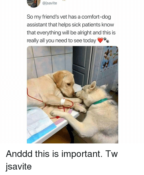 Friends, Memes, and Today: @jsavite  So my friend's vet has a comfort-dog  assistant that helps sick patients know  that everything will be alright and this is  really all you need to see today Anddd this is important. Tw jsavite