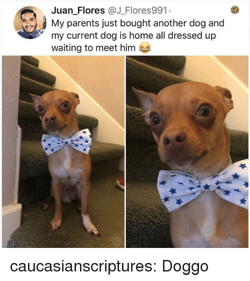 Parents, Tumblr, and Blog: Juan Flores @J Flores991  My parents just bought another dog and  my current dog is home all dressed up  waiting to meet hinm caucasianscriptures:  Doggo