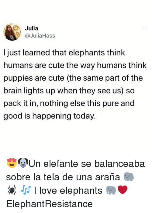 Cute, Love, and Memes: Julia  @JuliaHass  l just learned that elephants think  humans are cute the way humans think  puppies are cute (the same part of the  brain lights up when they see us) so  pack it in, nothing else this pure and  good is happening today. 😍🐶Un elefante se balanceaba sobre la tela de una araña 🐘 🕷 🎶 I love elephants 🐘❤️ ElephantResistance