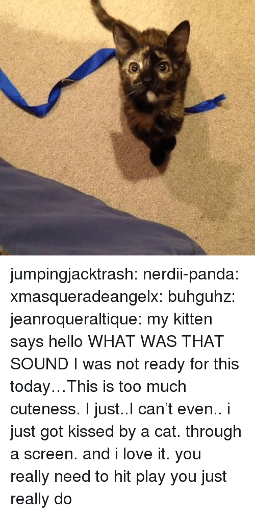 Hello, Love, and Too Much: jumpingjacktrash: nerdii-panda:  xmasqueradeangelx:  buhguhz:  jeanroqueraltique:  my kitten says hello  WHAT WAS THAT  SOUND  I was not ready for this today…This is too much cuteness. I just..I can't even..  i just got kissed by a cat. through a screen. and i love it.  you really need to hit play you just really do