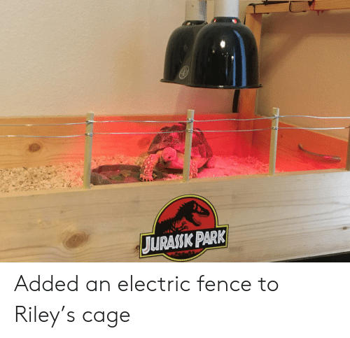 cage: JURASSK PARK Added an electric fence to Riley's cage