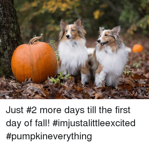 Fall, Memes, and 🤖: Just #2 more days till the first day of fall!  #imjustalittleexcited #pumpkineverything