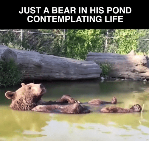 Life, Memes, and Bear: JUST A BEAR IN HIS POND  CONTEMPLATING LIFE