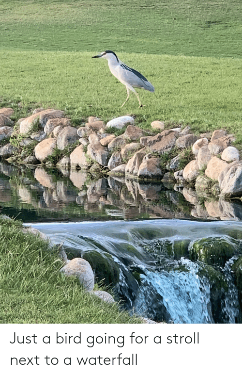 Next To: Just a bird going for a stroll next to a waterfall