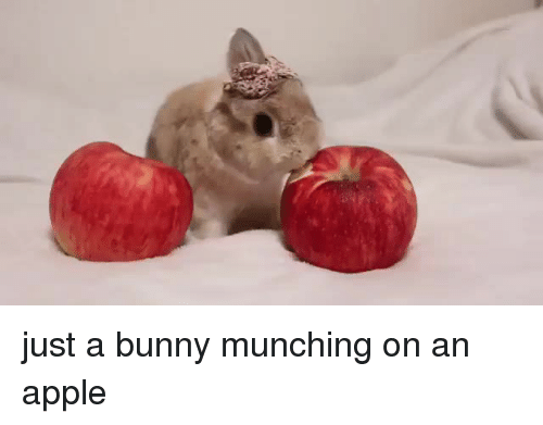 Apple, Bunny, and Just: just a bunny munching on an apple