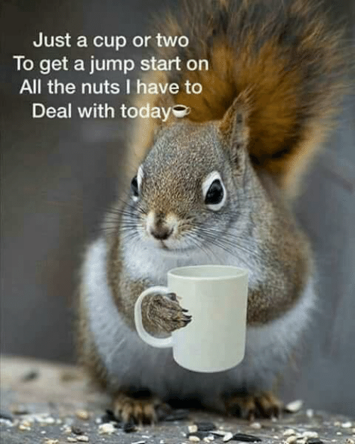 Dank, Today, and All The: Just a cup or two  To get a jump start on  All the nuts I have to  Deal with today