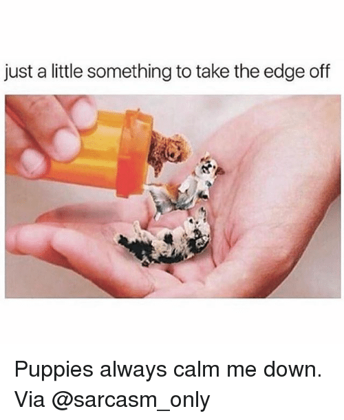 Memes, Puppies, and Sarcasm: just a little something to take the edge off Puppies always calm me down. Via @sarcasm_only
