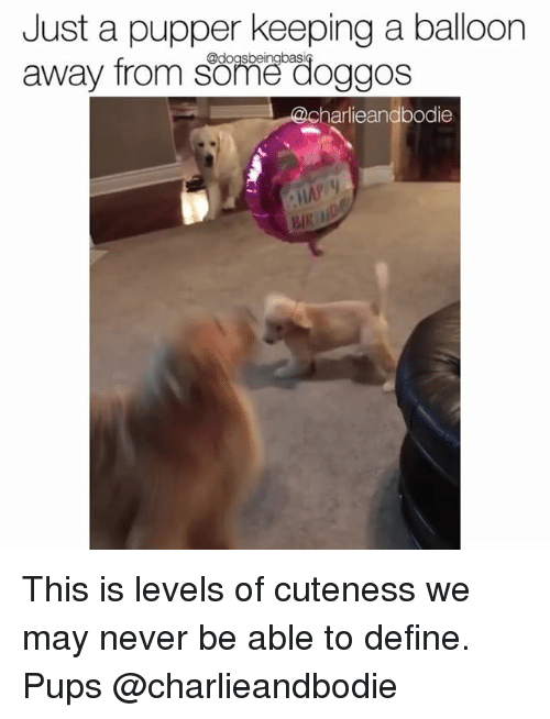 Memes, Define, and Never: Just a pupper keeping a balloon  away from some doggos  harlieandbodie This is levels of cuteness we may never be able to define. Pups @charlieandbodie