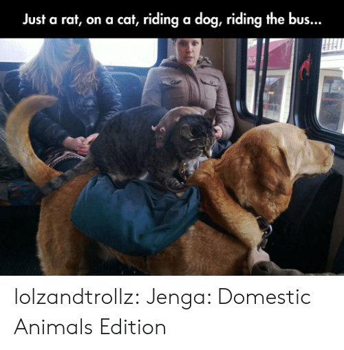 Domestic: Just a rat, on a cat, riding a dog, riding the bus... lolzandtrollz:  Jenga: Domestic Animals Edition