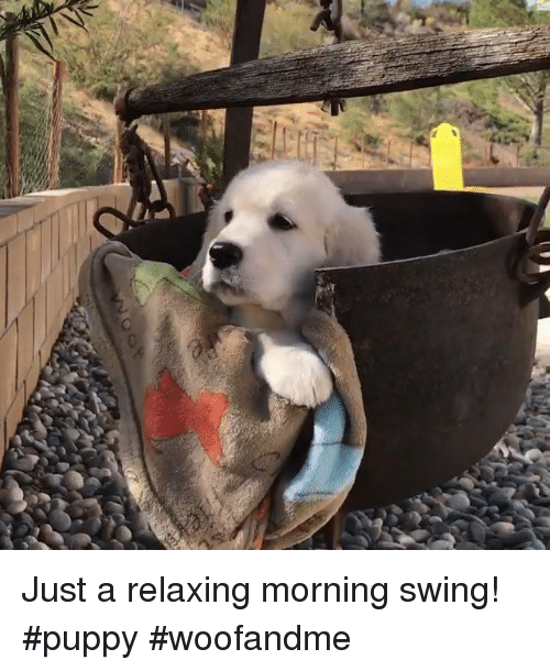 Memes, Puppies, and Puppy: Just a relaxing morning swing! #puppy #woofandme