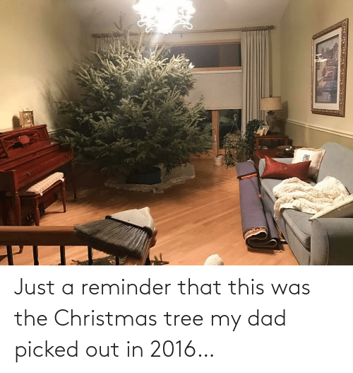 Christmas Tree: Just a reminder that this was the Christmas tree my dad picked out in 2016…
