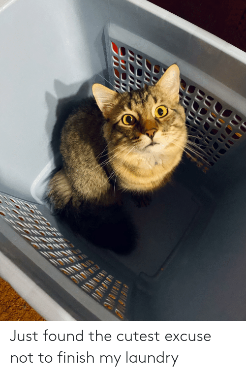 Laundry: Just found the cutest excuse not to finish my laundry