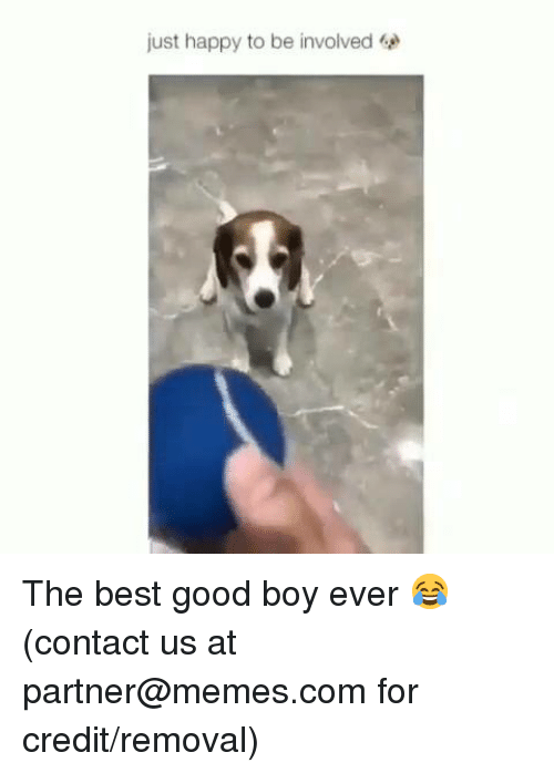 Dank, Memes, and Best: just happy to be involved The best good boy ever 😂  (contact us at partner@memes.com for credit/removal)