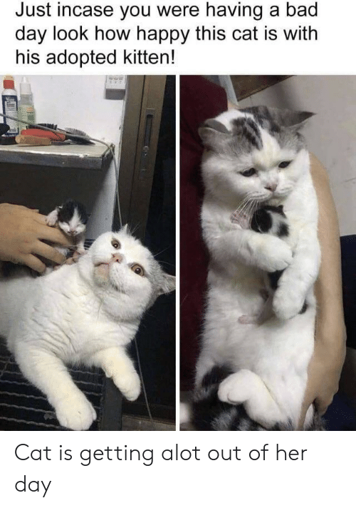 Bad, Bad Day, and Happy: Just incase you were having a bad  day look how happy this cat is with  his adopted kitten! Cat is getting alot out of her day