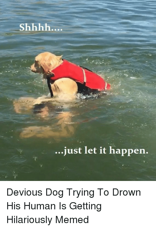 Dog, Human, and To Drown: ..just let it happen. Devious Dog Trying To Drown His Human Is Getting Hilariously Memed