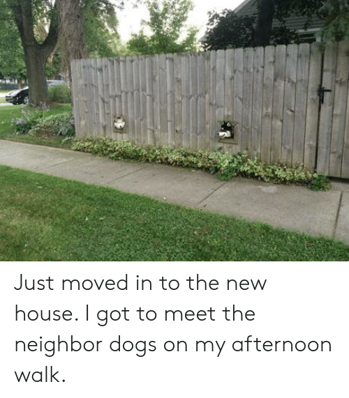 Dogs, House, and Got: Just moved in to the new house. I got to meet the neighbor dogs on my afternoon walk.