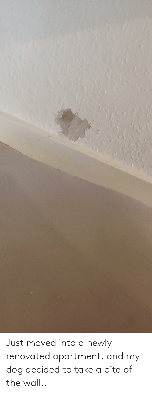 bite: Just moved into a newly renovated apartment, and my dog decided to take a bite of the wall..