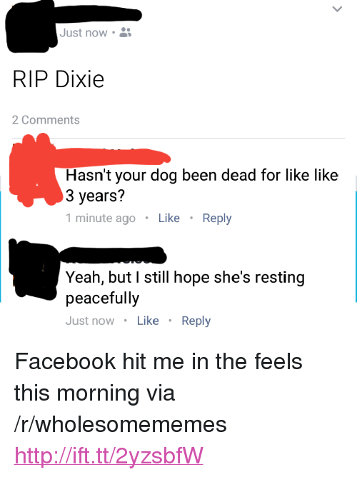 "Facebook, Yeah, and Http: Just now .  RIP Dixie  2 Comments  Hasn't your dog been dead for like like  3 years?  1 minute agoLike Reply  Yeah, but I still hope she's resting  peacefully  Just now Like Reply <p>Facebook hit me in the feels this morning via /r/wholesomememes <a href=""http://ift.tt/2yzsbfW"">http://ift.tt/2yzsbfW</a></p>"