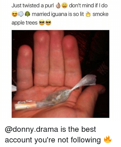 Apple, Lit, and Memes: Just twisted a purl  don't mind if do  married iguana is so lit  smoke  apple trees @donny.drama is the best account you're not following 🔥