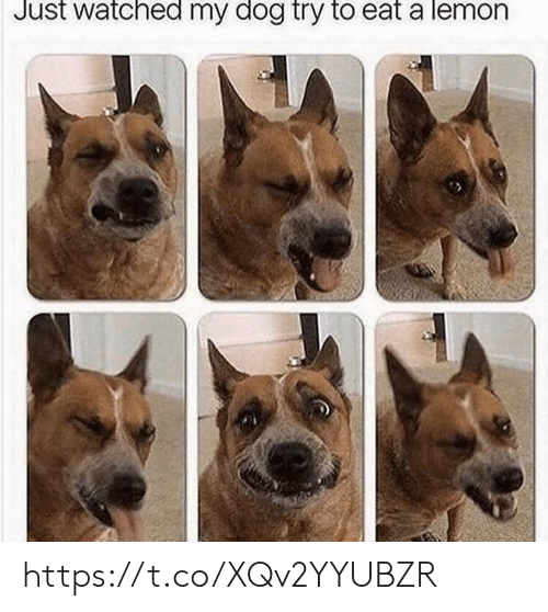 lemon: Just watched my dog try to eat a lemon https://t.co/XQv2YYUBZR