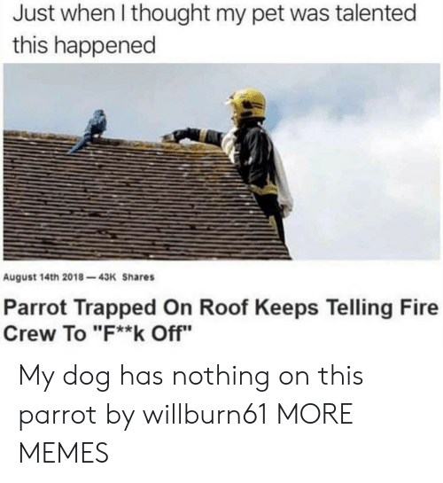 "Dank, Fire, and Memes: Just when I thought my pet was talented  this happened  August 14th 2018-43K Shares  Parrot Trapped On Roof Keeps Telling Fire  Crew To ""F**k Off"" My dog has nothing on this parrot by willburn61 MORE MEMES"