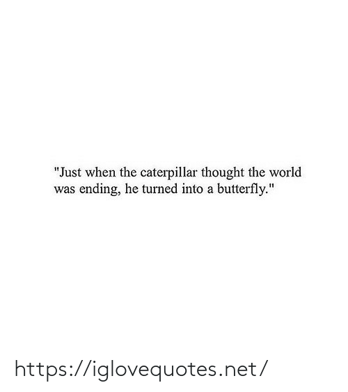 "Butterfly: ""Just when the caterpillar thought the world  was ending, he turned into a butterfly."" https://iglovequotes.net/"