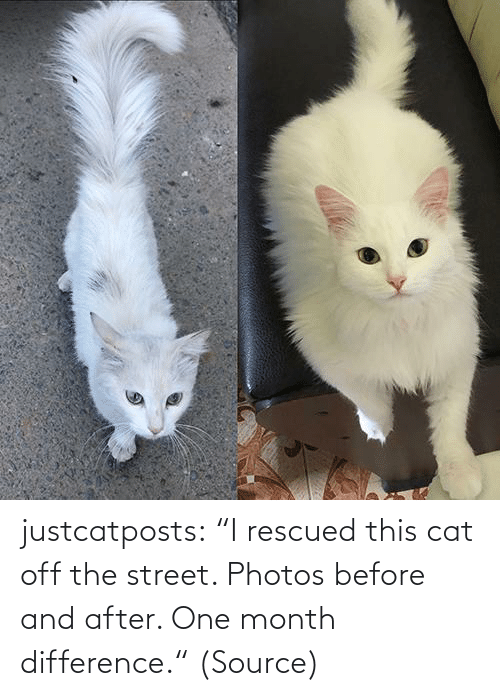 "After: justcatposts:  ""I rescued this cat off the street. Photos before and after. One month difference."" (Source)"