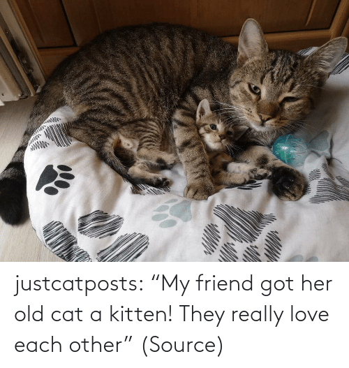 "each other: justcatposts:  ""My friend got her old cat a kitten! They really love each other"" (Source)"