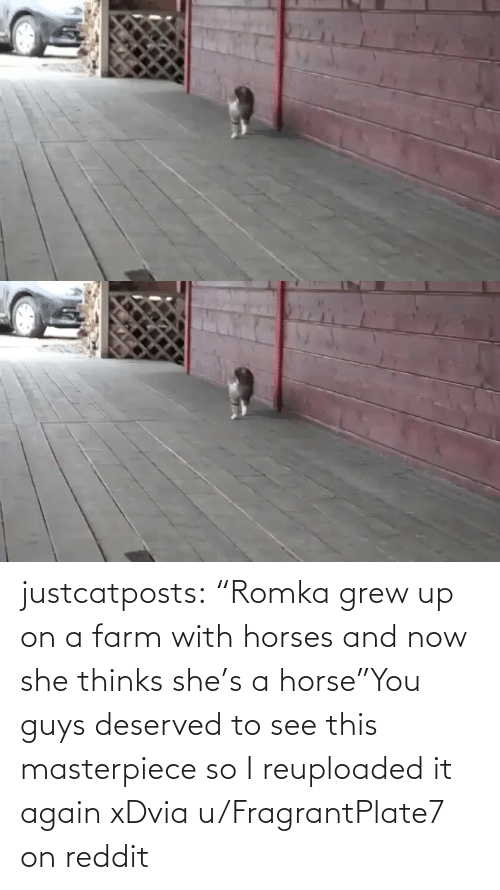"It Again: justcatposts:  ""Romka grew up on a farm with horses and now she thinks she's a horse""You guys deserved to see this masterpiece so I reuploaded it again xDvia u/FragrantPlate7 on reddit"