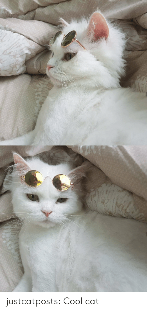 cat: justcatposts:  Cool cat