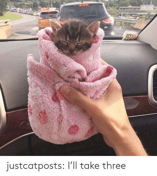 three: justcatposts:  I'll take three