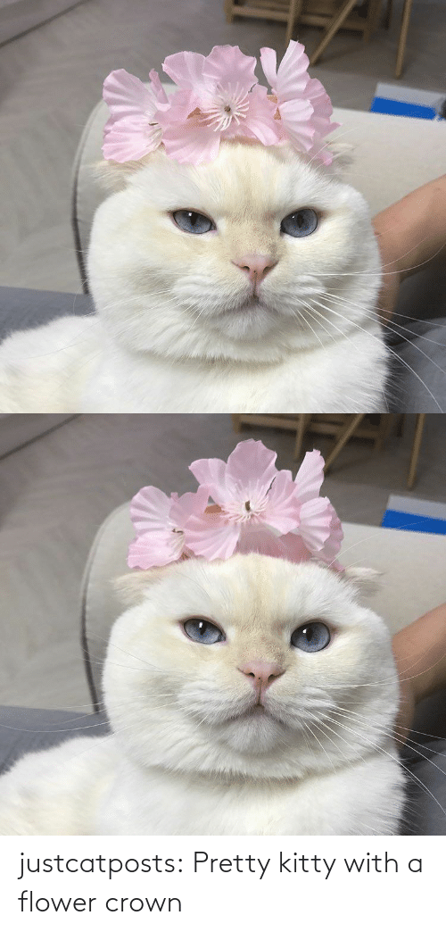 pretty: justcatposts:  Pretty kitty with a flower crown