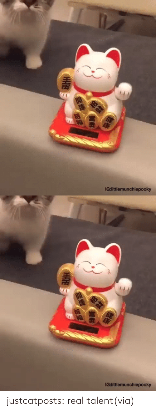 real: justcatposts:  real talent(via)