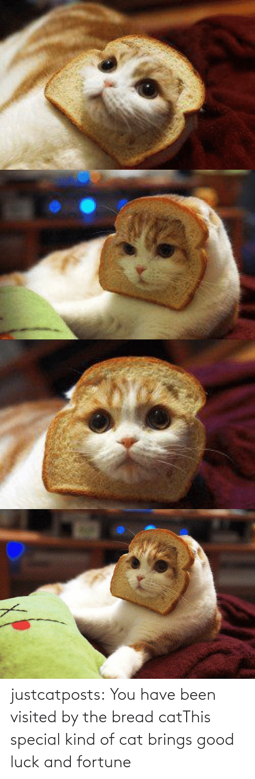 cat: justcatposts:  You have been visited by the bread catThis special kind of cat brings good luck and fortune