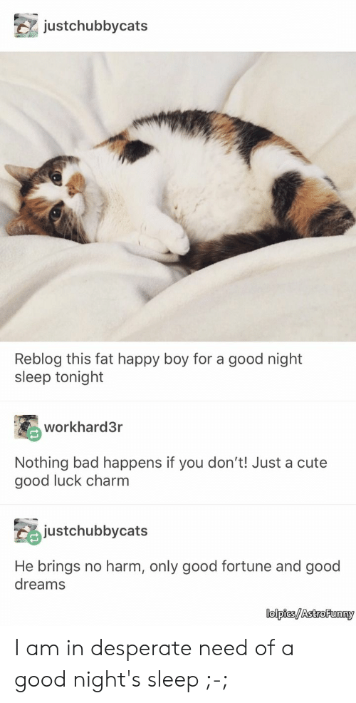 Bad, Cute, and Desperate: justchubbycats  Reblog this fat happy boy for a good night  sleep tonight  workhard3r  Nothing bad happens if you don't! Just a cute  good luck charm  justchubbycats  He brings no harm, only good fortune and good  dreams  lolpics/Astro Funny I am in desperate need of a good night's sleep ;-;