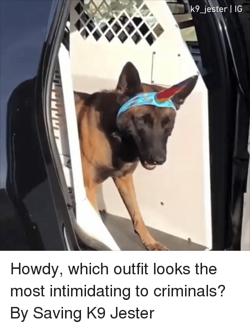 Dank, 🤖, and Jester: k9_jester IG Howdy, which outfit looks the most intimidating to criminals?  By Saving K9 Jester