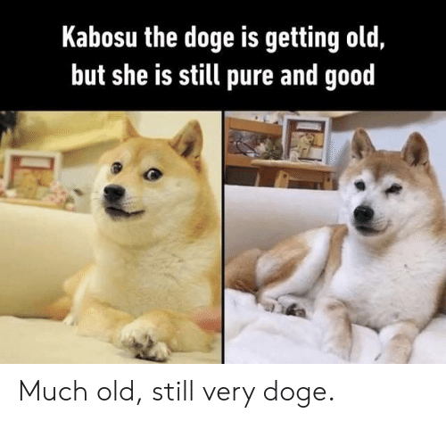 Doge, Good, and Old: Kabosu the doge is getting old,  but she is still pure and good Much old, still very doge.
