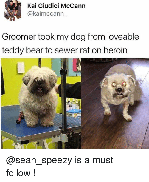 Heroin, Memes, and Bear: Kai Giudici McCann  @kaimccann  Groomer took my dog from loveable  teddy bear to sewer rat on heroin @sean_speezy is a must follow!!