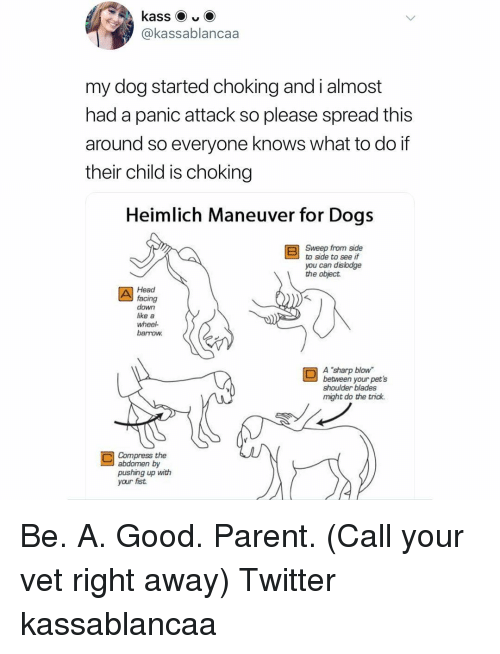 "Dogs, Head, and Memes: @kassablancaa  my dog started choking and i almost  had a panic attack so please spread this  around so everyone knows what to do if  their child is choking  Heimlich Maneuver for Dogs  Sweep from side  to side to see if  you can dislodge  the object  Head  facing  down  like a  wheel  barrow  A ""sharp blow  between your pet's  shoulder blades  might do the trick.  Compress the  abdomen by  pushing up with  your fist Be. A. Good. Parent. (Call your vet right away) Twitter kassablancaa"