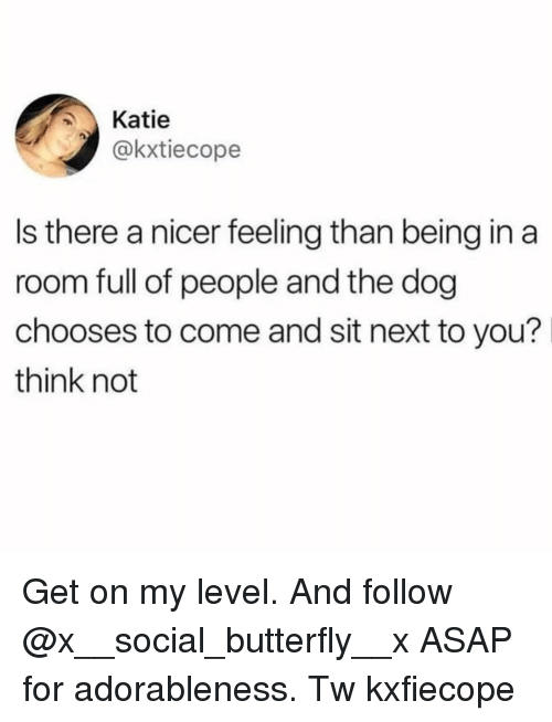 Memes, Butterfly, and 🤖: Katie  @kxtiecope  Is there a nicer feeling than being in a  room full of people and the dog  chooses to come and sit next to you?  think not Get on my level. And follow @x__social_butterfly__x ASAP for adorableness. Tw kxfiecope