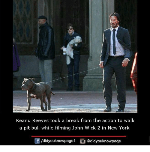 John Wick, Memes, and 🤖: Keanu Reeves took a break from the action to walk  a pit bull while filming John Wick 2 in New York  /didyouknowpagel  @didyouknowpage