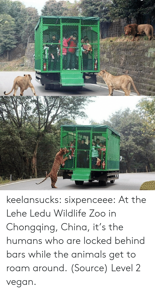Animals, Tumblr, and Vegan: keelansucks:  sixpenceee:  At the Lehe Ledu Wildlife Zoo in  Chongqing, China, it's the humans who are locked behind bars while the  animals get to roam around.  (Source) Level 2 vegan.