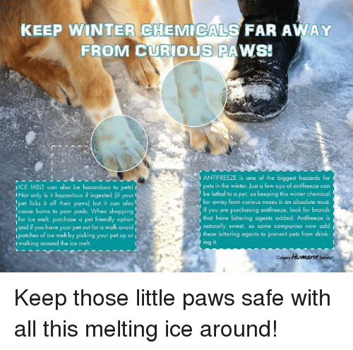 Memes, Shopping, and Winter: KEEP WINTER CHEMICALS FAR AWAY  FROM CURIOUS PAWS!  ANTIFREEZE is one of the biggest hazards for  pets in the winter. Just a few sips of antifreeze carn  be lethal to a pet, so keeping this winter chemicol  far away from curious noses is an absolute must  If you are purchasing antifreeze, look for brands  that have bittering agents added. Antifreeze is  naturally sweet, so some companies now add  these bittering agents to prevent pets from drin  ing it  IICE MELT can also be hazardous to petsl  I Not only is it hazardous if ingested (if your  pet licks it off their paws) but it can also  cause burns to paw pads. When shopping  for ice melt, purchase a pet friendly opion  iand if you have your pet out for a walk avoid  ipatches of ice melt by picking your pet up or i  Iwalking around the ice melt.  Celgory Homane sociey Keep those little paws safe with all this melting ice around!