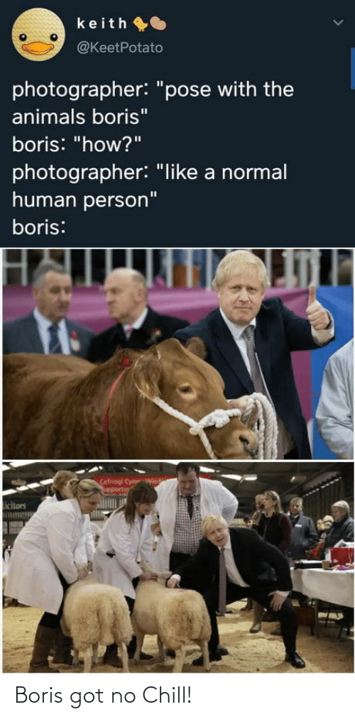 "Chill: keith O  @KeetPotato  photographer: ""pose with the  animals boris""  boris: ""how?""  photographer: ""like a normal  human person""  boris:  Cefnogi Cym  upportin  icitors Boris got no Chill!"