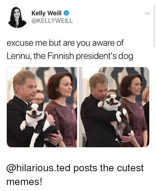 Memes, Ted, and Presidents: Kelly Weill  @KELLYWEILL  excuse me but are you aware of  Lennu, the Finnish president's dog @hilarious.ted posts the cutest memes!