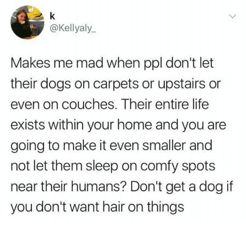 Dogs, Funny, and Life: @Kellyaly  Makes me mad when ppl don't let  their dogs on carpets or upstairs or  even on couches. Their entire life  exists within your home and you are  going to make it even smaller and  not let them sleep on comfy spots  near their humans? Don't get a dog if  you don't want hair on things