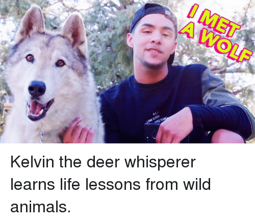 Animals, Deer, and Life: Kelvin the deer whisperer learns life lessons from wild animals.