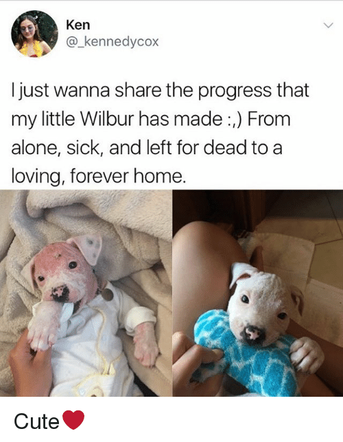 homely: Ken  @kennedycox  I just wanna share the progress that  my little Wilbur has made :,) From  alone, sick, and left for dead to a  loving, forever home. Cute❤️